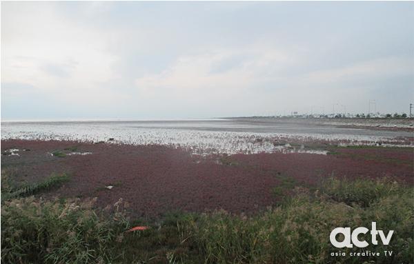생물다양성 풍부…화성 매향리 갯벌 '습지보호지역' 지정